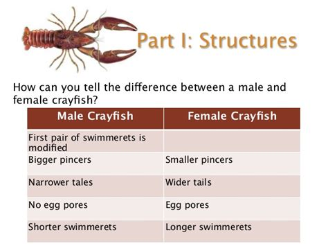 how can i tell if crayfish classroom slides