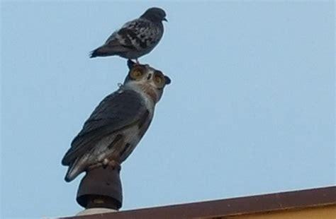 keep birds porch garden owls to scare birds garden ftempo