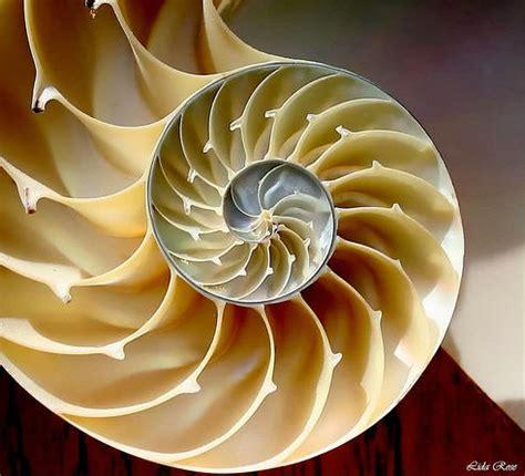 imagenes de fractales matematicas 99scuse fractales y n 250 mero a 250 reo en la naturaleza