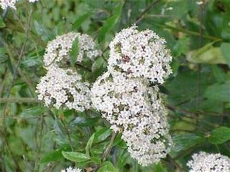 piccola area di terreno con erba e fiori siepi a crescita veloce siepi