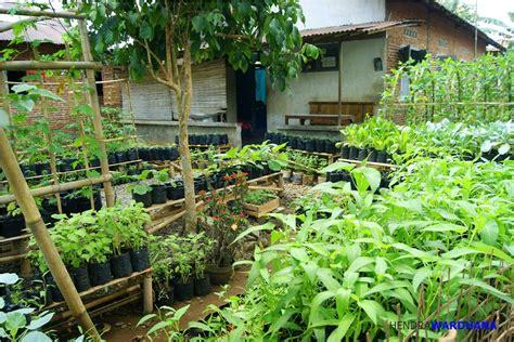 Bertanam Tomat Di Dalam Pot Dan Kebun Mini melihat desa terbaik di jawa tengah dan caranya menopang ketahanan pangan lokal kompasiana