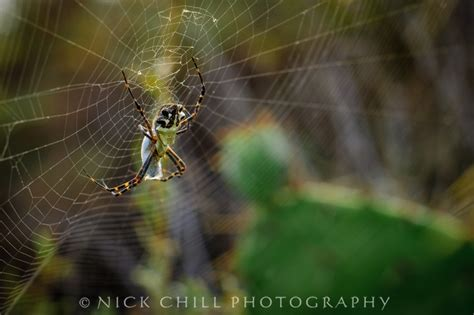 Garden Spider Totem 17 Best Images About Amazing Animals By Me On