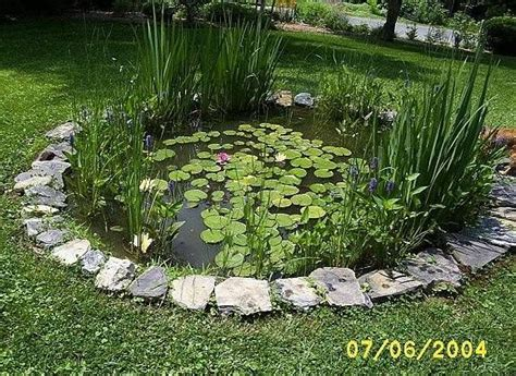 backyard frog pond concrete fish ponds construction how to build a