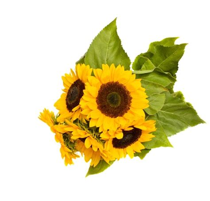 co d fiori mazzo di girasoli consegna a domicilio di bouquet di