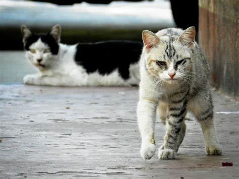 how to get rid of stray cats in your backyard how to keep stray cats away a guide that works