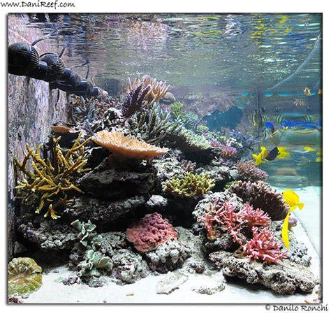 Aquascape Di Lu la vasca di luca girlando quot lucasabao quot the tank of