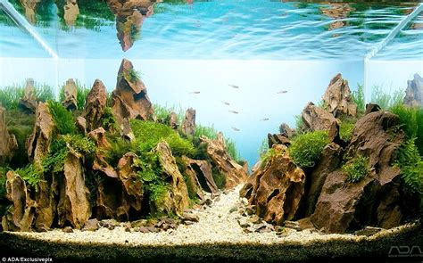 Aquascape Rocks by Aquarium Warfare Welcome To Competitive Sport Of