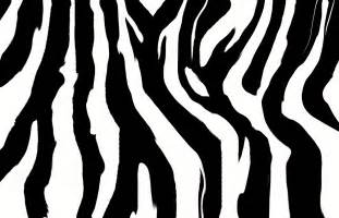 zebra print designs zebra print nail designs 2015 best nails design ideas