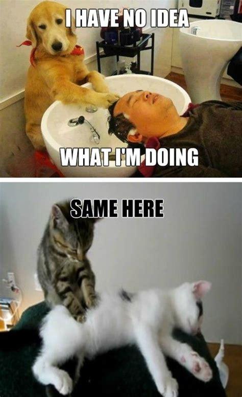 Salon Meme - 51 best images about hair beauty memes on pinterest