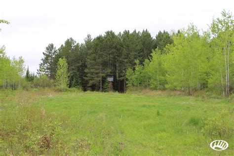 Affordable Northwoods Hunting Acreage For Sale Near Duluth   Whitetail Properties