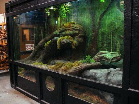 aquarium habitat design east bay vivarium s asian water dragon redtailboa net