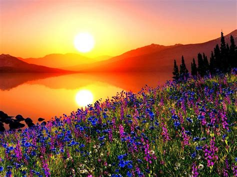 sunset mountain meadow  flowers pine trees mountains