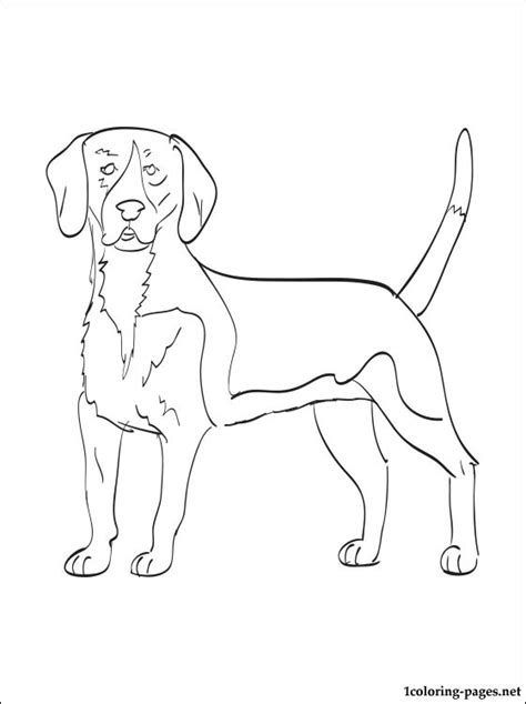 harrier dog coloring page coloring pages