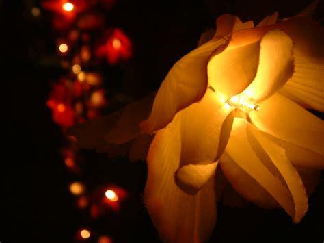 How To Make Floral Lights Flower Pressflower Press Flower Lights Uk