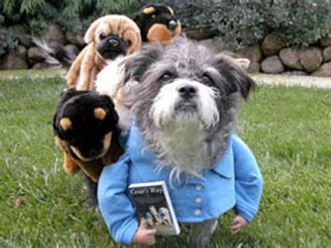 user submitted halloween pet costumes hgtv