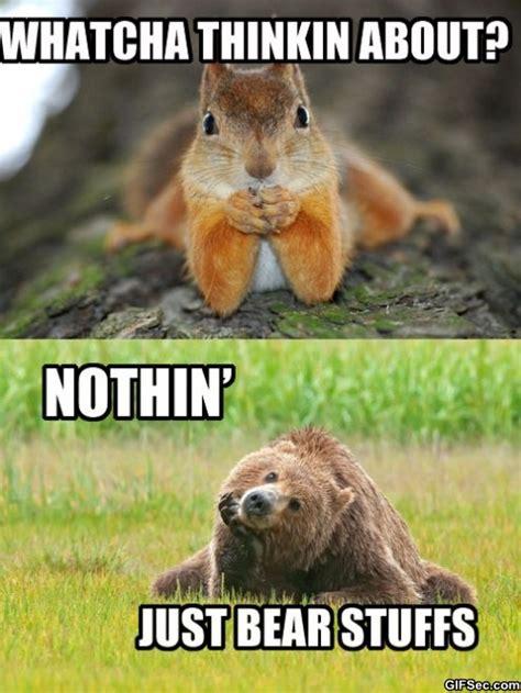 Bear Stuff Meme - what you thinking about bear stuff