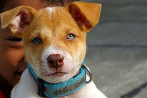 can dogs get pink eye from humans pink eye on dogs goldenacresdogs