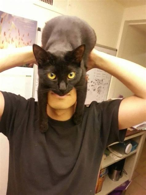 how to your to like cats catman shows how to look like batman using your cat bored panda