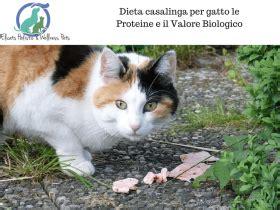 alimentazione casalinga anziano cure naturali per gatto e non convenzionali elicats