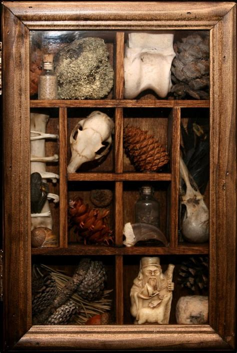 Cabinet Of Curiosities by 1000 Ideas About Cabinet Of Curiosities On