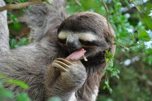 animals pictures sloth animals pictures and animals