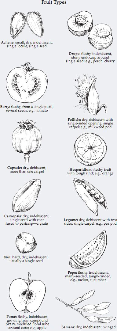 3 fruit types plant structure and types of fruit