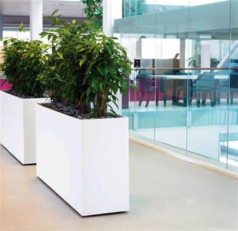 plants for the office office plants office plant hire ambius uk