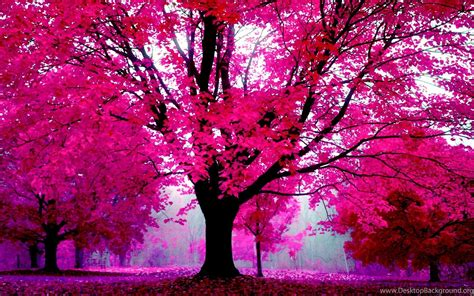 pink nature wallpaper hd 5 nature in pink forest trees wallpapers 447 trees in
