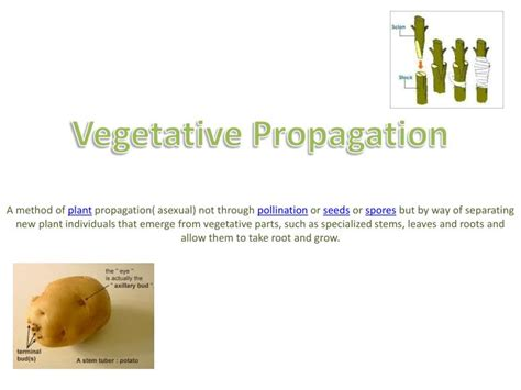 exles of vegetative propagation by roots ppt vegetative propagation powerpoint presentation id