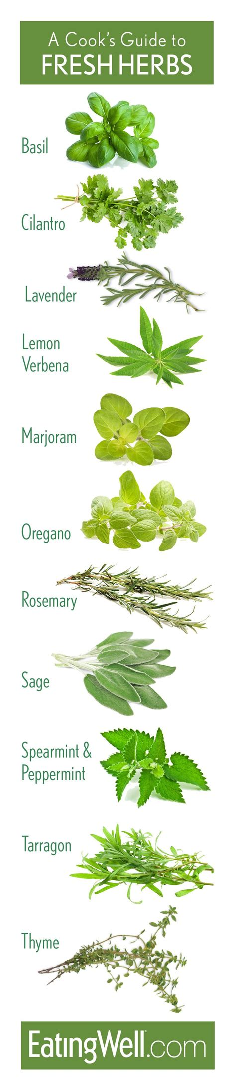 fresh planted herbs gastronomy pinterest identify fresh herbs www imgkid com the image kid has it