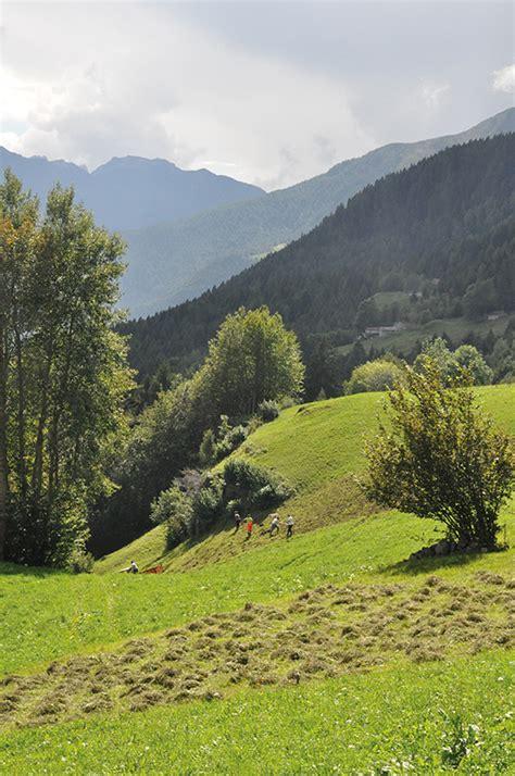 di valle camonica prati montani di valle camonica grafo edizioni