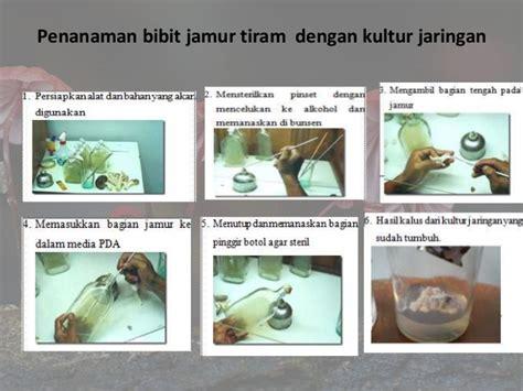 laporan praktikum budidaya jamur tiram