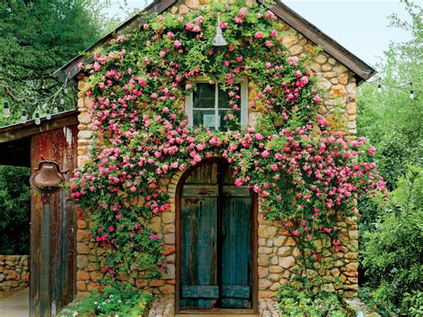 garden rose trellis plan gift ideas for her pinterest why you must know about the rose that survived katrina
