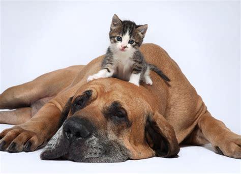 imagenes de animales jpeg perros y gatos 191 amigos o enemigos