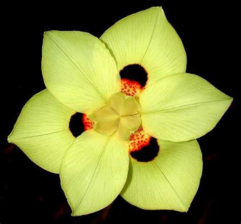 unusual flowers summer flower unusual flowers