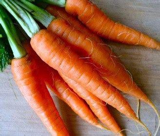 Penjual Bibit Tanaman Okra jual benih bibit wortel murah lengkap bibit