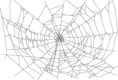 drawing web page spider web realistic pencil and in color