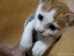 wallpaper gif kucing wallpaper kucing lucu bergerak search results calendar