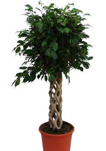 Indoor Low Light Plants by Low Light Indoor Plants You Can Decorate With