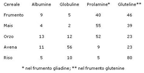 alimenti contenenti frumento gli alimenti contenenti glutine fanno bene o fanno