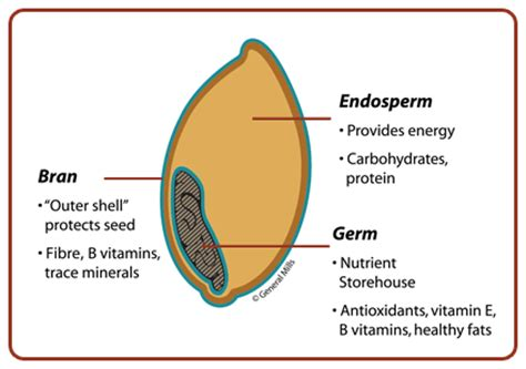 whole grain kernel diagram nutritionrx 187 want a smaller waist size make all of your