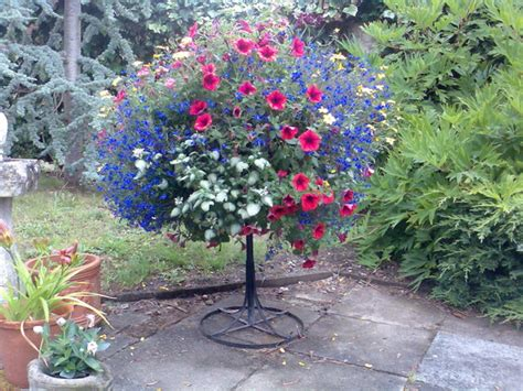 Annuals For Planters by Hanging Baskets Jelly Cottage Plants