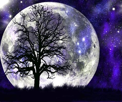 in the moonlight which is alone in the moonlight digital by conine