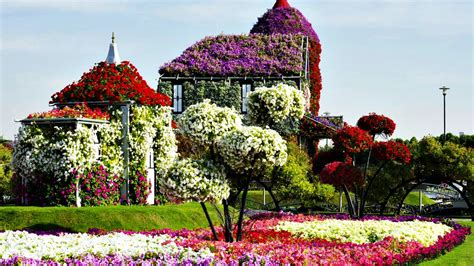 flower house  dubai miracle garden park series unique