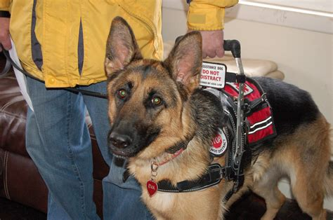 support dogs mobility support harness