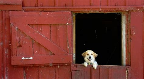 Dog Barn by Barn Dog Jigsaw Puzzle