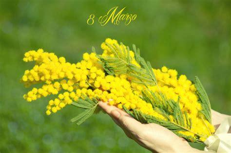 foto 8 marzo fiori giornata della donna 8 marzo