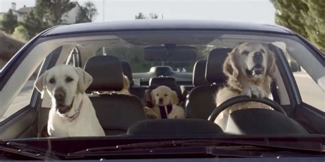 ad of the day subarus road tripping dogs are cute funny and almost subaru dog tested caign business insider