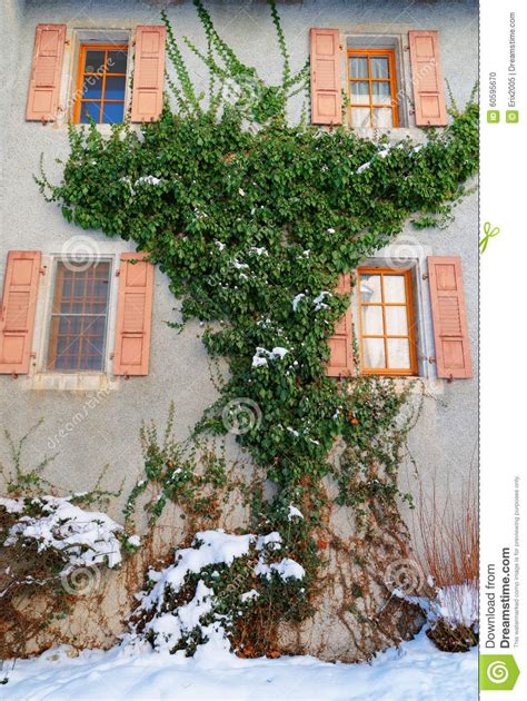 ivy and stone home on instagram ivy climbing up the wall stock photo image of december