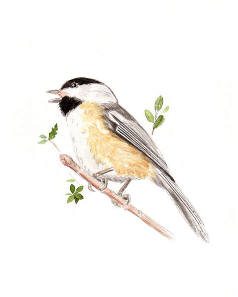 Heavy Textured Paint - black capped chickadee watercolor painting archival print